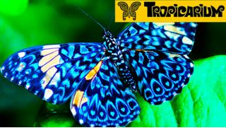 Бабочки! Билет на выставку живых тропических бабочек и экзотических беспозвоночных в центре «Тропикариум»! Скидка 50%