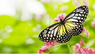 Живая природа! Билет на выставку живых тропических бабочек и экзотических беспозвоночных в центре «Тропикариум»! Скидка 50%