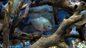 Океанариум! «Морской аквариум на Чистых прудах» для детей и взрослых! В будни и выходные скидка до 76%