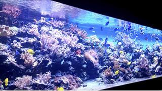 Пошли на экскурсию в океанариум «Морской аквариум на Чистых прудах»!  Для детей и взрослых! Скидка 76%!