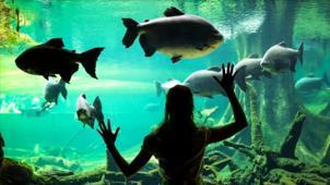 Купон на экскурсию в океанариум «Морской аквариум на Чистых прудах» для детей и взрослых! В будни и выходные!