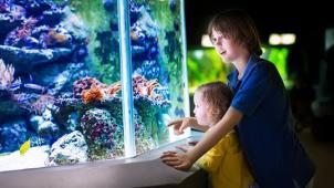 Океанариум по купону! Океанариум «Морской аквариум на Чистых прудах»!  Интересно для детей и взрослых! Скидка 76%!