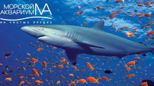 Купон в океанариум в Москве! Океанариум «Морской аквариум на Чистых прудах»! Для детей и взрослых со скидкой 76%!