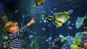 Как в океане! Океанариум «Морской аквариум на Чистых прудах»! Для детей и взрослых со скидкой 76%!