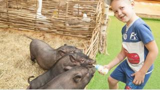 Воспитываем любовь к животным! Посещение контактного зоопарка «Рога и копыта» в любой день недели со скидкой 50%!