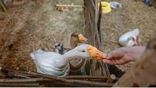Посещение контактного зоопарка «Рога и копыта» в любой день недели со скидкой 50%! Своди детишек в зоопарк!