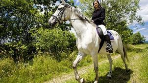 Кони всегда в моде! Конные прогулки от частной конюшни «Эквилого»: 1 или 2 часа для одного или двоих в будни и выходные