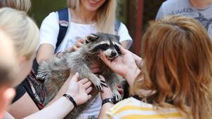 Зоопарк в Ступино! Экскурсия в зоостудию животных-актеров «Ковчег» для детей и взрослых в выходные и будни!