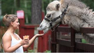Контактный зоопарк! Экскурсия в зоостудию животных-актеров «Ковчег» для детей и взрослых в выходные и будни