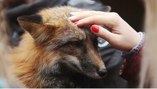 Экскурсия в зоостудию животных-актеров «Ковчег» для детей и взрослых в выходные и будние дни со скидкой 50%!