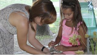 Здесь много зверушек! Билет для 2 взрослых и 1 ребенка в сеть контактных зоопарков Zoo-mini со скидкой 50%! Всего за 200 руб!