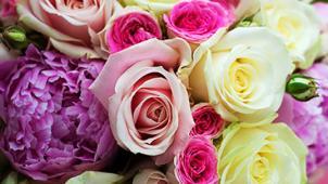 Цветы для нее! Букеты из свежих эквадорских или голландских роз, тюльпанов в шляпных в коробках!